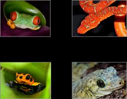 St  Louis Reptile Show